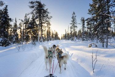 HMS2433354 Sweden, Norrbotten, Kiruna, dog sledding in Swedish Lapland