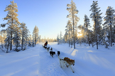HMS3157144 Sweden, Lapland, region listed as World Heritage by UNESCO, Norrbotten County, sled dogs in the vicinity of Jokkmokk