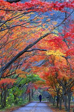 KR02180 South Korea, Jeolla Do, Naejangsan National Park