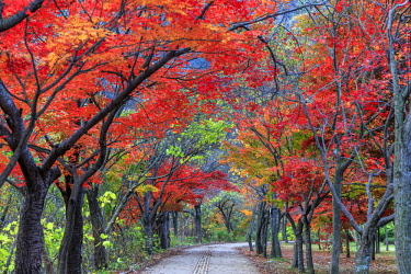 KR02183 South Korea, Jeolla Do, Naejangsan National Park