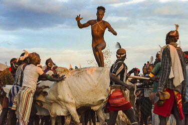 AF16KSU0353 Hamar tribe, people's Cattle Jumping (a ceremonial event celebrating a Hamar man comes of age), the man jumping over a cow, Hamar Village, South Omo, Ethiopia