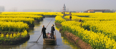 AS07KSU1880 Rowing boat on river through Thousand-Islet canola flower fields, Xinghua, Jiangsu Province, China