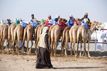 OMA2778 Middle East, Oman.  Camels lined up ready for Camel racing at the Al Bashair Race Track near Adam.