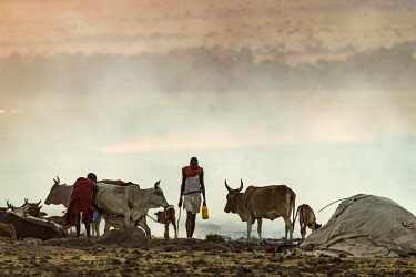 KEN10944AW Kenya, Narok County, Maasai Mara, Masailand. Maasai men gather at a temporary cattle holding area just outside the Maasai Mara National Reserve. Tens of thousands of cattle are brought into the Reserv...