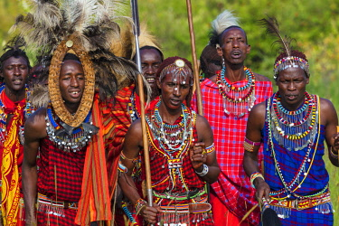 KEN11016AW Kenya, Narok County, Maasai Mara, Masailand. Maasai men dressed in traditional attire with spears and sticks singing and dancing at a cultural ceremony at their homestead near Aitong just outside the...