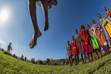 KEN11088AW Kenya, Maasai Mara, Maasailand. Maasai gather at a cultural ceremony for visotrs, singing and dancing. The men and women are cloaked in traditoanl red shukas and kangas, carrying sticks and spears, an...
