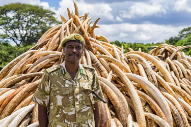 KEN11217AW Kenya, Nairobi National Park, Nairobi. CEO of Kenya Wildlife Service, Kitili Mbathi stands at the site of the ivory burning. Ivory tusks - 105 tons in total - and ivory carvings were burned by Preside...