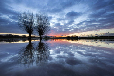 NIS00023583 Two Willows (Salix) standing in the water at sunset, The Netherlands, Limburg