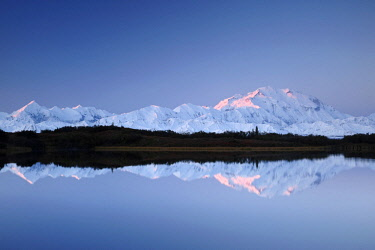 Denali, reflected in Reflection Pond, also known as Mount McKinley, its former official name, is North America's highest mountain at 20,310 feet or 6,190 meter, The morning alpenglow touches the peak...