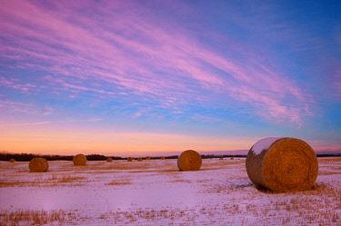 CN01BJY0112 Canada, Alberta, Stony Plain. Bales in snowy field at sunset.