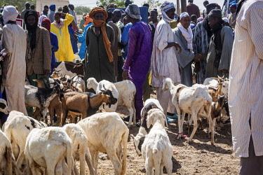 SEN1094AW Africa, Senegal. An animal market near to Saint Louis.