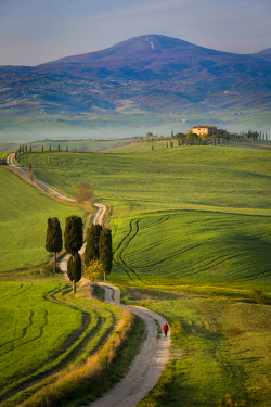 EU16BJN0556 Cypress trees and winding road to villa near Pienza, Tuscany, Italy