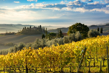 EU16BJN0708 Early morning over vineyard and the Belvedere near San Quirico d'Orcia, Tuscany, Italy