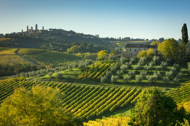 EU16BJN0725 Vineyards and olive groves below San Gimignano, Tuscany, Italy