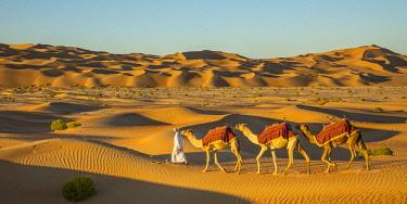 UE02419 Camels in the Empty Quarter (Rub Al Khali), Abu Dhabi, United Arab Emirates (MR)