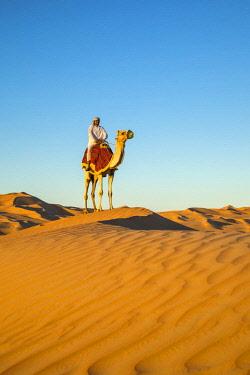 UE02423 Camel in the Empty Quarter (Rub Al Khali), Abu Dhabi, United Arab Emirates