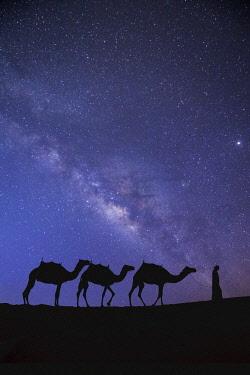UE02426 Camels in the Empty Quarter (Rub Al Khali), Abu Dhabi, United Arab Emirates (MR)
