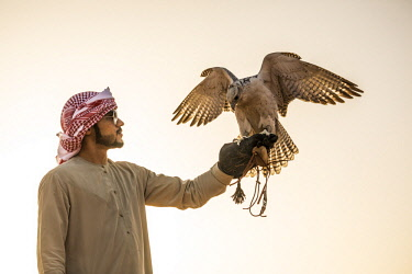 UE02440 Man with falcon, Empty Quarter (Rub Al Khali), Abu Dhabi, United Arab Emirates (MR)