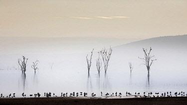 CLKMG63014 Lake Nakuru, Rift Valley, Kenya