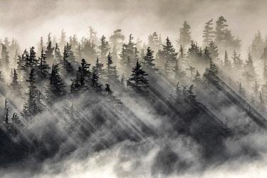 CLKMG71886 Chugach national forest, Kenai Peninsula, Alaska, United states of America, North America