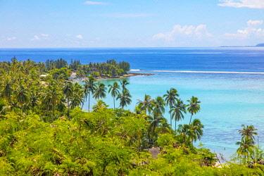 OC13DPB0444 Coconut Grove, Temae, Moorea, French Polynesia
