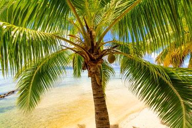 OC13DPB0473 Les Tipaniers, Tiahura, Moorea, French Polynesia