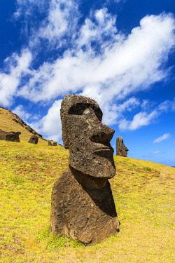 CHI11025AW Moai heads at the nursery, Easter Island. Polynesia, Chile