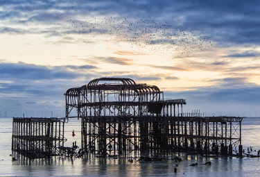 ENG15429AW Starling murmuration above Brighton West Pier, East Sussex, England