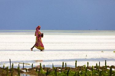 TZ3691AW A woman walks on the sand in a seaweed farm at low tide, Paje, Zanzibar, Tanzania