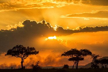 TZ3575AW Tanzania, Serengeti National Park. Sunrise over the southern plains of the Serengeti.