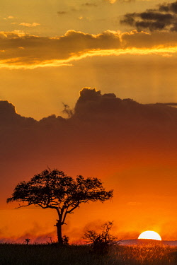 TZ3578AW Tanzania, Serengeti National Park, Moru Kopjes. Sunrise at the end of the rainy season in June. Smoke from distant fires adds colour to the scene. Balanites tree in the foreground.