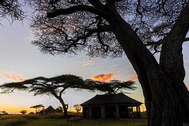 TZ3593AW Tanzania, Serengeti National Park, Asilia's Namiri Plains Tented Camp, Ngare Nanyuki river, near Barafu Kopjes. Acacia woodland at sunrise along the Ngare Nanyuki river. This is the site of Asilia's N...