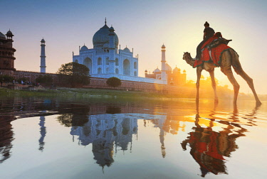 IND8500AW India, woman crossing the Yamuna river on a camel with the Taj Mahal in the background at sunset