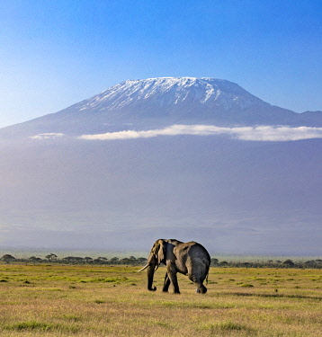 KEN10664 Kenya, Amboseli, Kajiado County.  A bull elephant with Mount Kilimanjaro in the background.