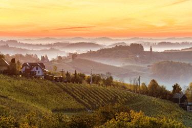 CLKAC82840 Sunrise in wine region. Spicnik, Kungota, Drava region, Slovenia.