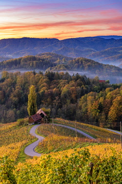 CLKAC82841 The heartshaped road at sunrise. Spicnik, Kungota, Drava region, Slovenia.