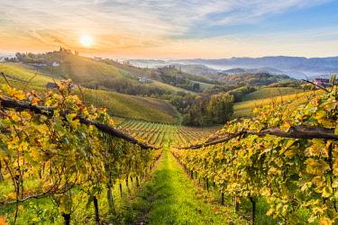 CLKAC82847 Sunrise in wine region. Spicnik, Kungota, Drava region, Slovenia.