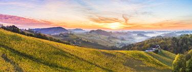 CLKAC82935 Sunrise in wine region. Spicnik, Kungota, Drava region, Slovenia.