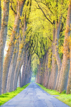 BEL1804AW Tree-lined Road, Damme, Belgium