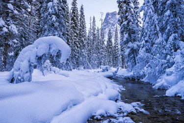 CAN3448AW Winter Wonderland along Emerald River, Yoho National Park, British Columbia, Canada