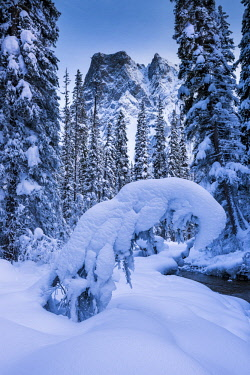 CAN3449AW Mt. Burgess in Winter, Yoho National Park, British Columbia, Canada