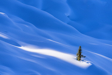 CAN3468AW Single Pine Tree in Winter, Banff National Park, Aberta, Canada