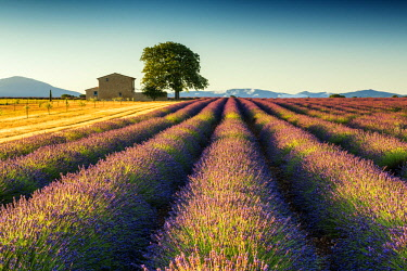 FRA10270AW Villa in Field of Lavender, Provence, France