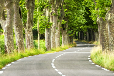 FRA10272AW Plane Tree-lined Road, Provence, France