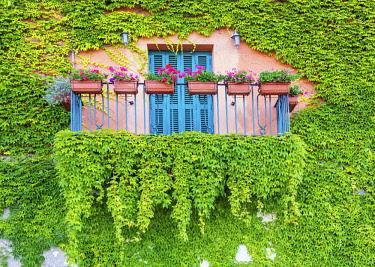 ITA12051AW Ivy-covered Balcony, Castiglione della Pescaia, Tucany, Italy