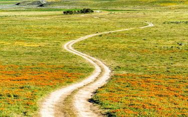 USA13131AW Road through California Poppies, Antelope Valley, California, USA