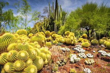 USA13164AW Desert Garden, Huntington Botanical Gardens, San Marino, California, USA
