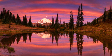 USA13278AW Mt. Rainier Reflecting in Tipsoo Lake at Sunrise, Mt. Rainier National Park, Washington, USA