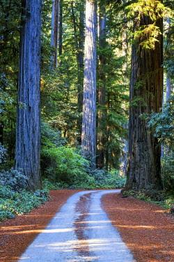 USA13299AW Road Through Redwoods, Jedediah Smith Redwood State Park, California, USA