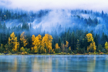 USA13320AW Low Mist and Autumn Trees Reflecting in Lake Wenatchee, Wenatchee National Forest, Washington, USA